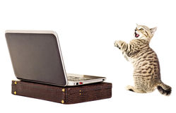 Amazed kitten before a laptop Stock Photos