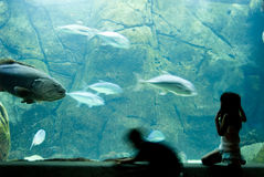 Amazement. Children watching fish at aquarium stock photography