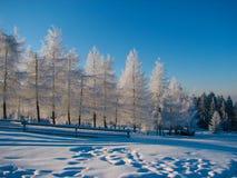 Amazig zima Zdjęcie Stock