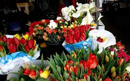 Red tulips and white callas on Bayloni market in Belgrade royalty free stock photography