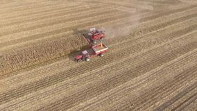 Amazing aerial 4k shot on big agriculture machine truck combine vehicle harvesting organic wheat crops from farm field. Amazing aerial shot on big agriculture stock video