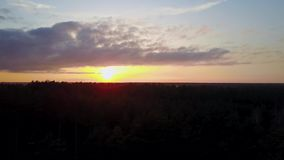 Aerial sunset view of pine forest in Canada stock video