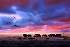 Free Amazing African Dramatic Sunset With Walking Elephants In Savannah. Artistic Fantastic Safari Landscape In Masai Mara National Stock Photography - 160744372