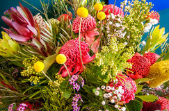Amazing Australian native flowers. Blue Mountains, Australia -September 21, 2015: Australian native flowers in a stunning visual display at the Waratah Festival Royalty Free Stock Photography