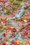 Amazing Autumn Forest Creek Stock Photo