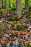 Amazing Autumn Forest Creek Royalty Free Stock Images