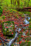 Amazing Autumn Forest Creek Royalty Free Stock Photo