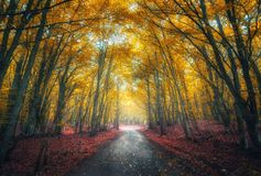 Amazing autumn forest with empty road in fog in the morning Stock Photos