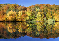 Amazing autumn forest reflected in a calm lake. Dreamland scene - amazing autumn forest, full of vibrant colors, reflected in a calm lake in the morning Stock Photo