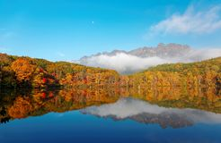 Amazing autumn lake scenery of Kagami Ike Mirror Pond in morning light with symmetric reflections of colorful fall foliage. On smooth water & rugged Togakushi stock images