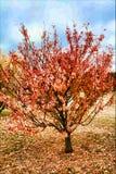 Amazing Autumn Landscape Stock Photo
