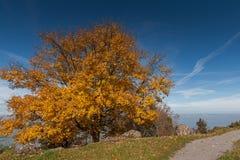 Amazing autumn landscape under Mount Rigi, Alps Royalty Free Stock Image