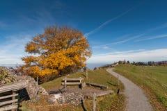 Amazing autumn landscape under Mount Rigi, Alps Royalty Free Stock Photography