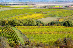 Amazing autumn landscape with vineyards Stock Photography