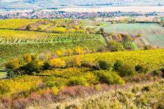 Amazing autumn landscape with vineyards Stock Photo