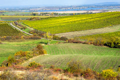 Amazing autumn landscape with vineyards Royalty Free Stock Photo