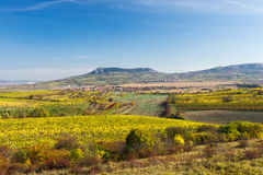 Amazing autumn landscape with vineyards Royalty Free Stock Photography