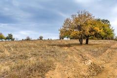 Amazing Autumn Landscape with yellow tree of Cherna Gora mountain, Bulgaria Stock Photo
