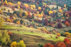 Autumn forest in Bulgaria royalty free stock images