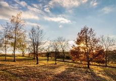 Amazing autumnal evening landscape with sun and colorful trees Royalty Free Stock Photo