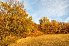 Amazing autumnal landscape with colorful forest Stock Photography