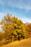 Amazing autumnal landscape with colorful forest Stock Image
