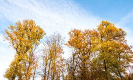 Amazing autumnal landscape with colorful trees Stock Photo