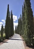 Amazing avenue of cypresses Royalty Free Stock Images