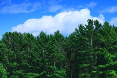 Amazing background with green forest, white clouds and blue sky. In summer bright day. Beautiful tree crowns of the wild forest, in the summer or autumn season stock photography