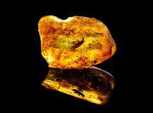 Amazing baltic amber with frozen in this piece a unknown prehistoric insect royalty free stock photo