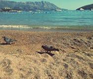 Amazing beach, island , mountains , pigeon and sea stock photos