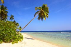 AMAZING BEACH WITH PALM TREES royalty free stock images