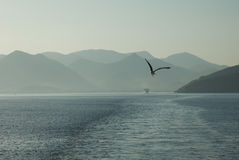 Amazing beach sea and bird Greece Corfu Stock Photography