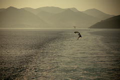 Amazing beach sea and bird Greece Corfu Royalty Free Stock Images