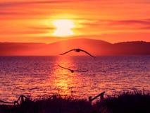 Amazing beach sunrise stock images