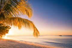 Beautiful beach sunset view. Palm tree and relaxing sea waves Royalty Free Stock Images