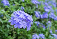 Amazing beautiful flowers background. Stock Images