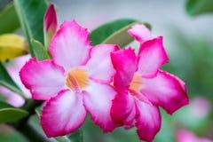 Amazing beautiful flowers background. Royalty Free Stock Image