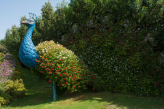 Amazing beautiful green giant peacock bird made from flowers in the garden Stock Image