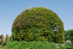 Amazing beautiful green round hill made from flowers in the garden Stock Photo