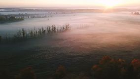 Amazing beautiful nature. Pink sunrise. Field with plants in hoarfrost and autumn colorful trees. Aerial video footage. Top view stock video footage