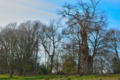 Amazing beautiful old tree Royalty Free Stock Photo