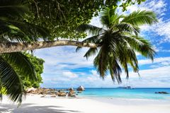 Paradise beach.White sand,turquoise water,palm trees at tropical. Amazing beautiful paradise beach.White sand,turquoise water,palm trees at tropical beach anse Royalty Free Stock Photos
