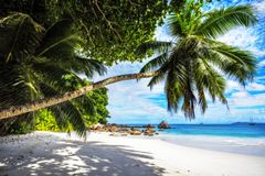 Paradise beach.White sand,turquoise water,palm trees at tropical. Amazing beautiful paradise beach.White sand,turquoise water,palm trees at tropical beach anse Royalty Free Stock Photography