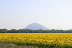 Sunflower field. Amazing and beautiful sunflower field in the warm summer day, the mountain behind the sunflower field stock image