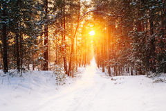 Free Amazing Beautiful Sunset Sunrise Sun Sunshine In Sunny Winter Sn Stock Images - 68308514