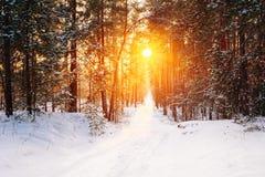 Amazing Beautiful sunset sunrise sun sunshine in sunny winter sn Stock Images