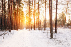 Amazing Beautiful sunset sunrise sun sunshine in sunny winter sn Stock Photos