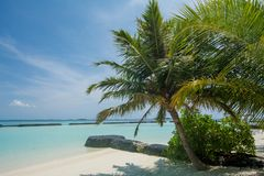 Amazing beautiful tropical beach landscape with ocean and palm trees at the tropical island Royalty Free Stock Photography