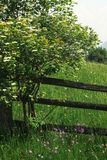 Amazing beautiful view of mountains flowers and grass under wooden fence in summer meadow Stock Images